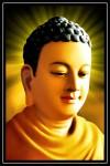 Phật thích ca 906 ( ép foam cán bóng )